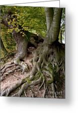 Taking Root Greeting Card