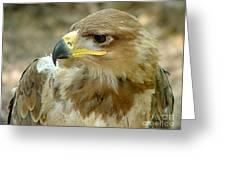 Tawny Eagle-11 Greeting Card