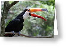 Talkative Toucan Greeting Card
