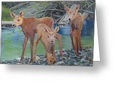 Talkeetna River Trio Greeting Card