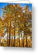 Tall Aspen With Sunstar Greeting Card