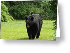 Tall Blackbear Greeting Card
