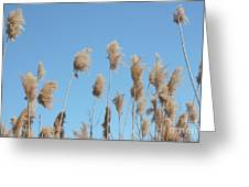 Tall Feathered Grass Hits Sky Greeting Card