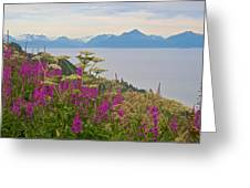Tall Fireweed And Cow Parsnip Over Cook Inlet Near Homer- Ak Greeting Card