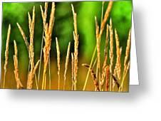 Tall Grain Greeting Card