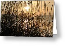 Tall Grass 1 Greeting Card