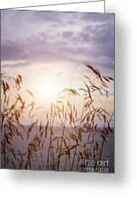 Tall Grass At Sunset Greeting Card
