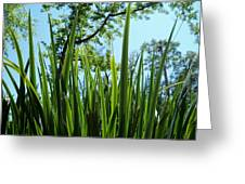 Tall Grass Greeting Card