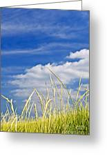 Tall Grass On Sand Dunes Greeting Card by Elena Elisseeva