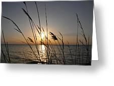 Tall Grass Sunset Greeting Card