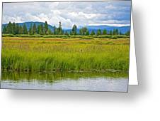 Tall Grasses In Swan Lake In Grand Teton National Park-wyoming Greeting Card