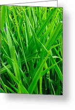Tall Green Grass Greeting Card