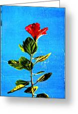 Tall Hibiscus - Flower Art By Sharon Cummings Greeting Card