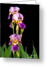 Tall Iris Greeting Card