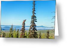 Tall Pine Trees And Hilly Background Greeting Card