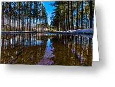 Tall Pines Greeting Card