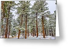 Tall Snowy Pines Greeting Card