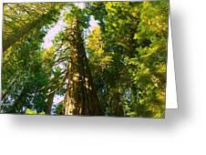 Tall Tall Trees Greeting Card