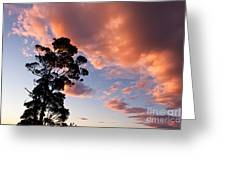 Tall Tree Against A Dramatic Sunset Clouds Sky Greeting Card