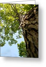Tall Tree Greeting Card by Stephanie Grooms