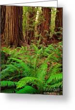 Tall Trees Grove Greeting Card