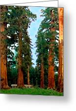 Tall Trees In Yosemite National Park Greeting Card