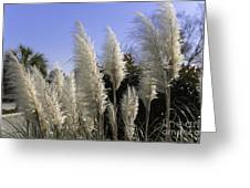 Tall Wispy Pampas Grass Greeting Card
