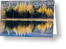 Tamarack Reflections Greeting Card