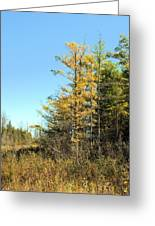 Tamarak Gold Greeting Card