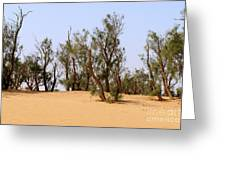 Tamarix Trees On Sand Dune  Greeting Card by Dan Yeger
