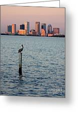 Tampa Skyline And Pelican Greeting Card