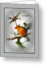 Tanager 4296-ttp Greeting Card