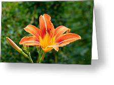 Tangerine Lily Greeting Card
