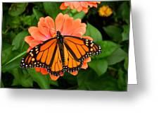 Tangerine Twosome Greeting Card
