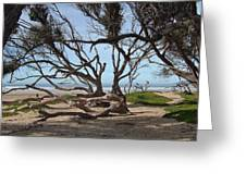 Tangle Of California Trees Greeting Card