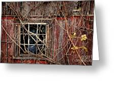 Tangled Up In Time Greeting Card by Lois Bryan