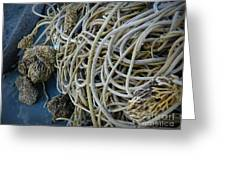 Tangles Of Seaweed 2 Greeting Card