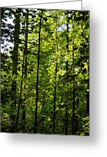 Tannehill Forest Greeting Card