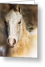 Taos Pony X Greeting Card