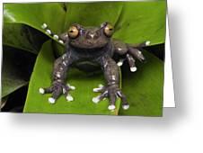 Tapichalaca Tree Ecuador Greeting Card