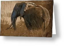 Tarangire Bull Greeting Card by Aaron Blaise