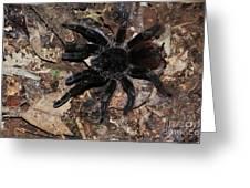 Tarantula Amazon Brazil Greeting Card