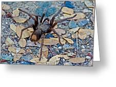 Tarantula Spider In Park Sierra Near Coarsegold-california Greeting Card