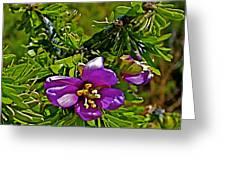 Tarbush In Chihuahuan Desert Of Big Bend National Park-texas   Greeting Card