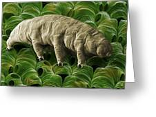Tardigrade Or Water Bear Greeting Card