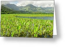 Taro Fields In Hanalei National Greeting Card