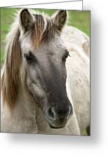 Tarpan Horse Greeting Card
