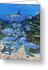 Tarpon Alley In0019 Greeting Card