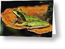 Tarraco Treefrog On Mushroom Costa Rica Greeting Card