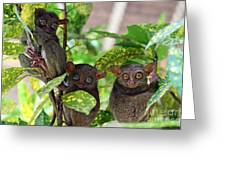 Tarsier Greeting Card by Lars Ruecker